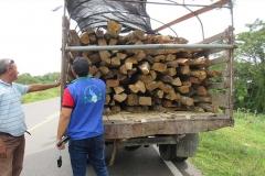 decomiso_madera_2_m