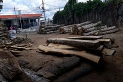 Gobernanza_Forestal_CARSUCRE_5